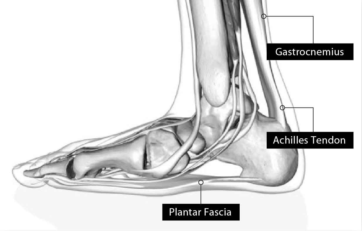foot-structure-stretching